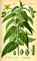 eserihija koli biljke